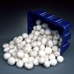 Ciupercile - pastile de sanatate!